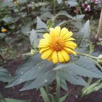 Помогите определить растение и причину его гибели