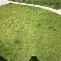 Почему газон с одной стороны дорожки хороший, а с другой пожелтел?