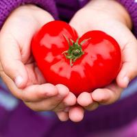 Обзор сердцевидных томатов: лучшее признание в любви садоводам