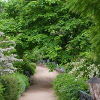 Самые шустрые! Деревья и кустарники, с помощью которых можно быстро озеленить участок