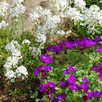 Поразительно живучи и неприхотливы: злаки, почвопокровные и пряные растения для средней полосы