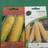 Как сажать кукурузу?