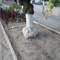 Подскажите, что с деревом?