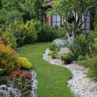 Простой способ мульчирования без снятия дёрна и создание сада лёгкого ухода