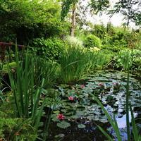 Пруд – любимое место отдыха и гордость нашего сада
