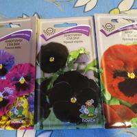 Как лучше посадить анютины глазки - рассадой или сразу в грунт?