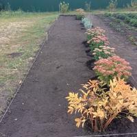 Помогите выбрать растения для клумбы