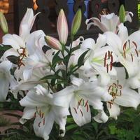 Цветы, которые удалось впервые посадить и вырастить на дачном участке.
