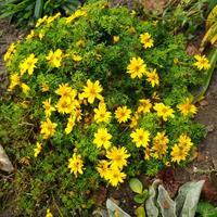 Помогите определить название цветка по фото