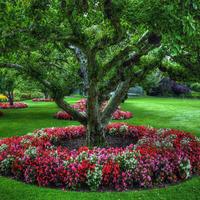 Подскажите, какие цветы в приствольных кругах?