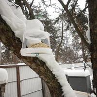В помощь нашим пернатым. Как мы подкармливаем птиц зимой