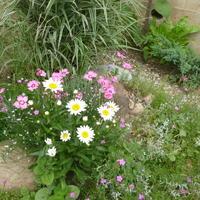 Камни в моем саду — для декора и не только...