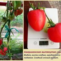 Сердечная тема в томатах