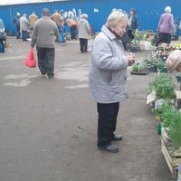 Как продавать растения со своего участка. Моральный и юридический аспекты