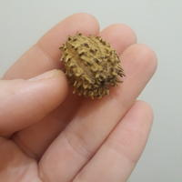 Помогите определить растение по семени