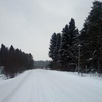 Лесотерапия, или Просто чаще гуляйте по лесу!