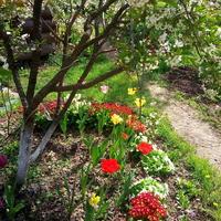 Весенние цветы в нашем саду, или Как сделать приствольный круг красивым