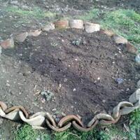 Помогите подобрать растения для клумбы с дицентрой и аквилегией