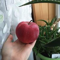 Пожалуйста, помогите опознать сорт яблони