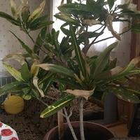 Что это за растение и как его спасти?