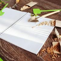 Чем обработать семена перед посевом: 13  самых эффективных биопрепаратов