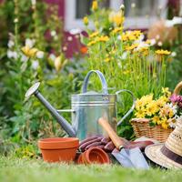 Сколько растений посадить в цветнике, чтобы им не было тесно
