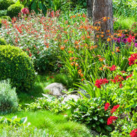 6 характеров садовых цветов - зачем нам нужно их знать