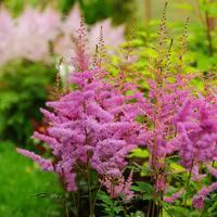 Цветник в полутени: добавьте яркие краски в темные уголки сада