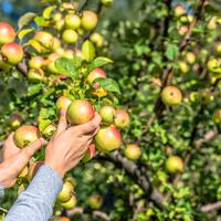 Как обрабатывать плодовый сад без химии. Программа биозащиты с апреля по октябрь