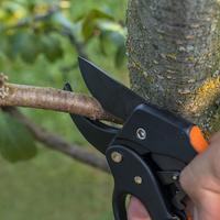 Обрезка в плодовом саду: какие ветви надо удалять немедленно