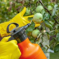 Обработка сада от болезней и вредителей: чем, когда и как