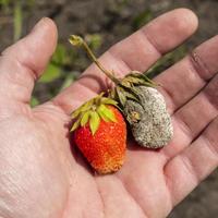 Опасные болезни, которые живут в почве. Как защитить от них свой огород?