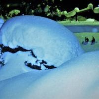 Защита роз от тяжёлого снега