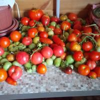 Обзор моих томатов в 2019-м