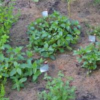 Вечные ярлычки для растений, которые не сгниют, не выгорят, не размокнут