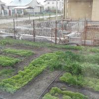 Севооборот и плодосмен при органическом земледелии