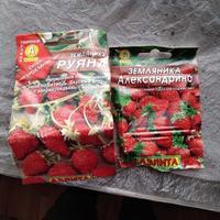 Мой опыт выращивания клубники из семян