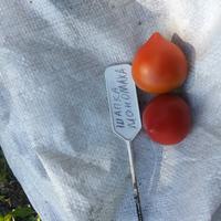 Любимые помидоры