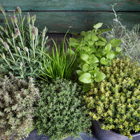 Пряный сад: ароматные травы на грядках и в цветниках
