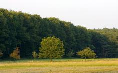 Живописный лес
