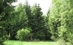 Ермолинский Лес