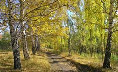 Шелестово (Истринский район Московской области)
