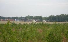 Луговой (Пушкинский район Московской области)