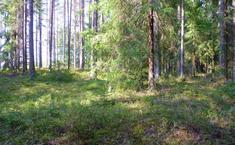 Лесная Дача (Выборгский район Ленинградской области)