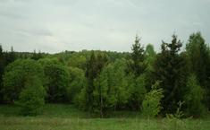 Лесные дачи