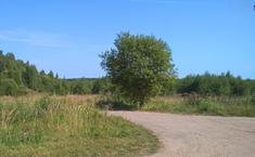 Лесная усадьба (Можайский район Московской области)
