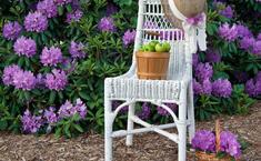 Его величество Дачный стул