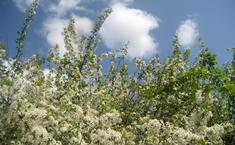 Вишнёвый сад