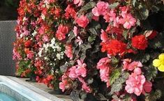 Вертикальная клумба для цветов