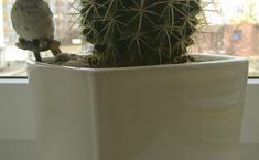 История о том, как четверо друзей -  кактус круглый, кактус длинный, кактус малый и Драцена нашли себе новый дом.